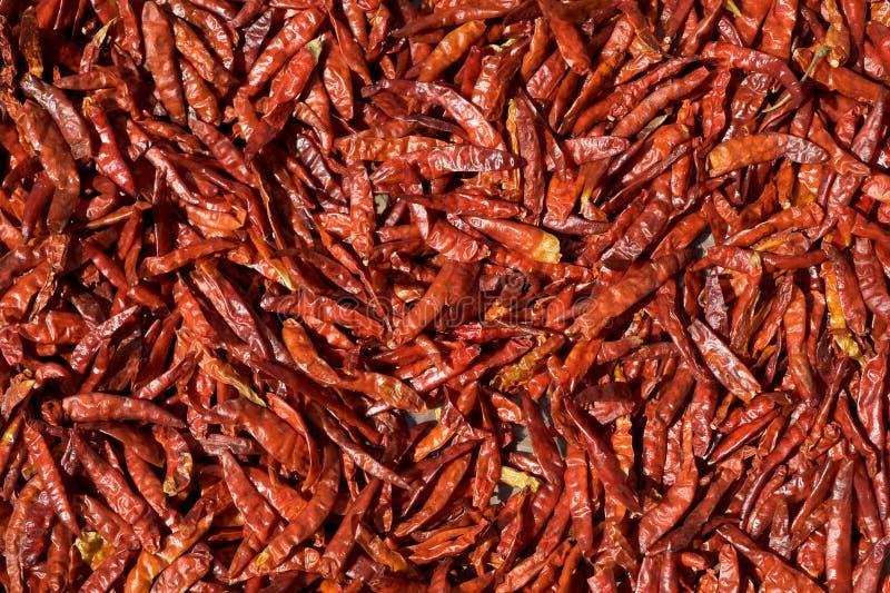 засыхание chili перчит красное солнце стоковые фотографии rf