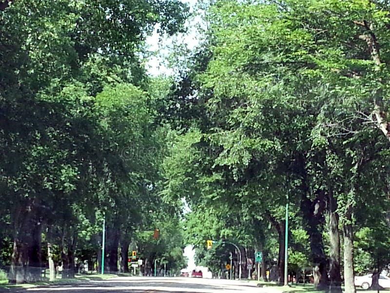 Затеняемая дорога стоковое фото rf