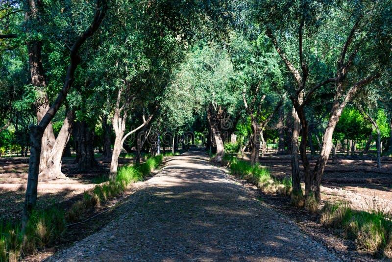 Затеняемая тропа выровнянная с деревьями на парке кибер в Marrakesh Марокко стоковые изображения rf