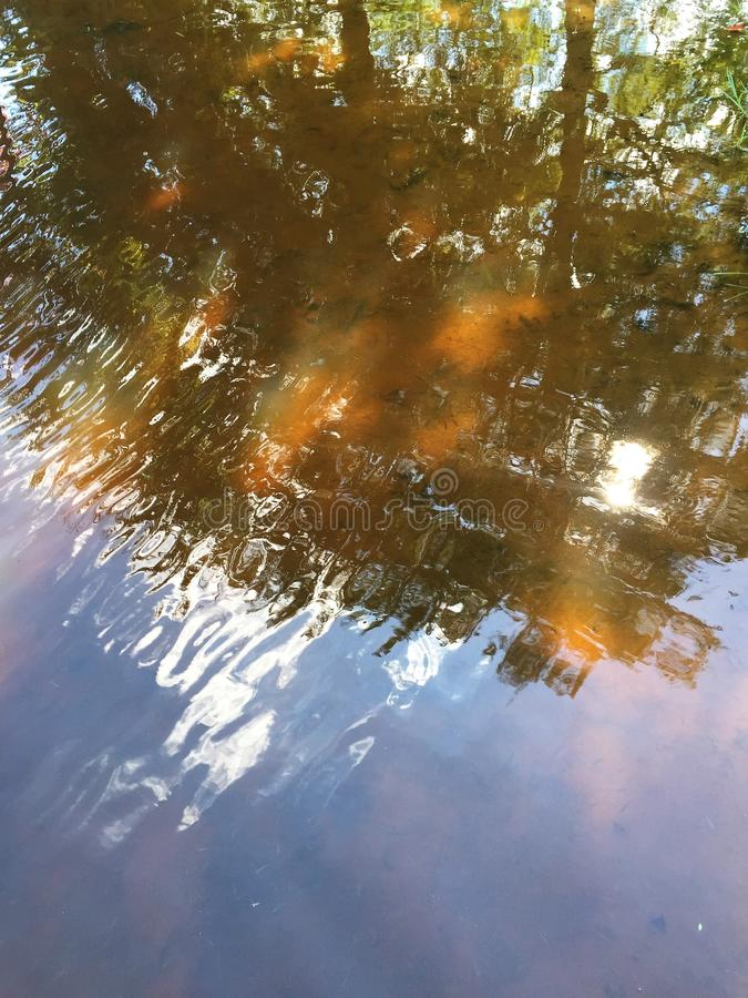 Затеняемые деревья стоковое фото