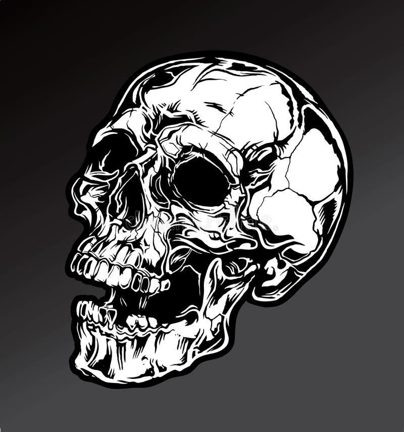 Детальный череп иллюстрация штока