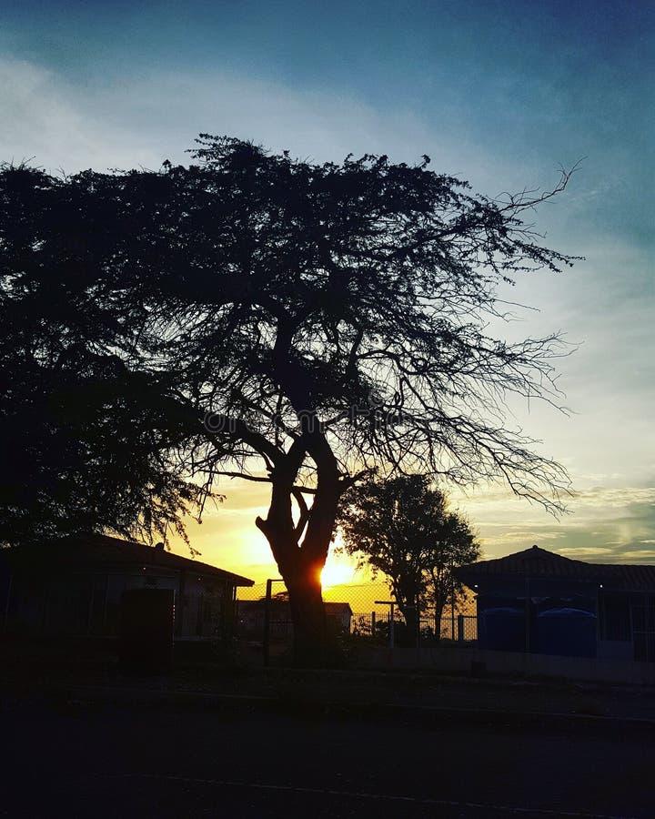 затеняет заход солнца стоковое фото rf