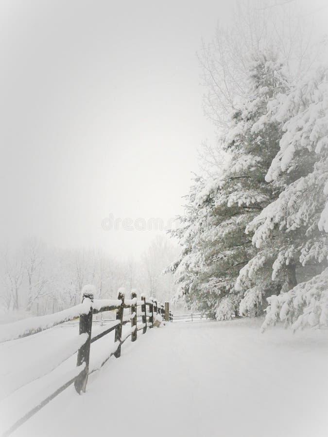 Затишье зимы после падения сильного снегопада стоковые фото