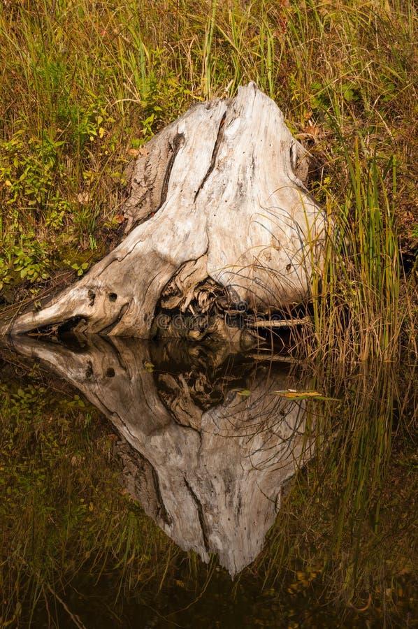 Затишье осени на отражении озера деревьев в воде стоковая фотография rf