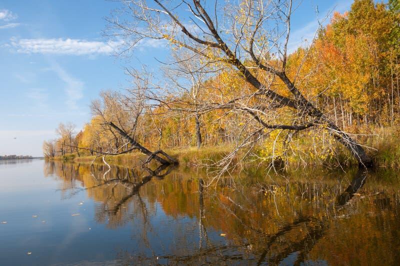 Затишье осени на отражении озера деревьев в воде стоковое изображение rf