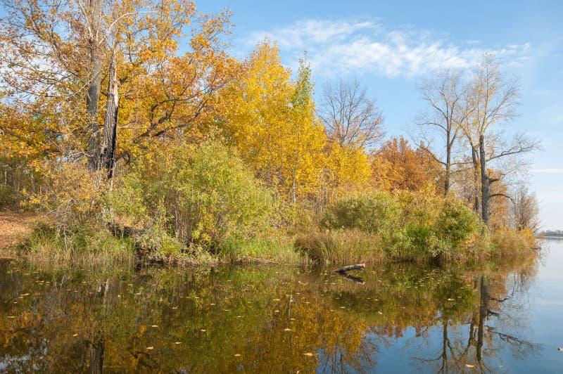 Затишье осени на отражении озера деревьев в воде стоковые изображения rf