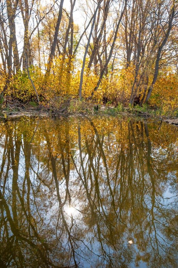 Затишье осени на отражении озера деревьев в воде стоковое фото rf