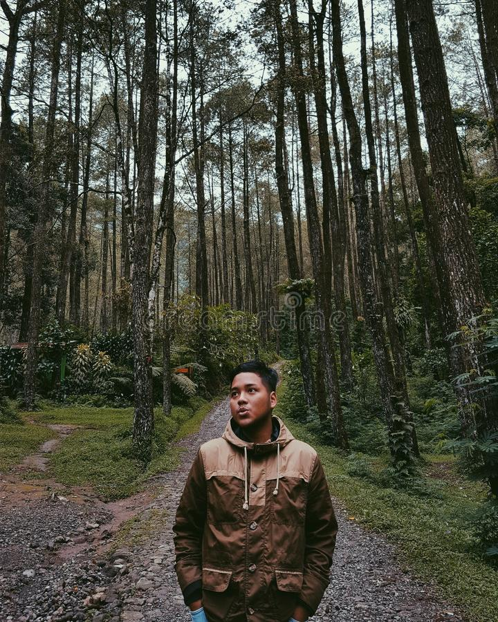Затишье природы исследует джунгли стоковые фото