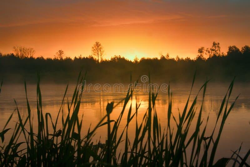 Затишье, приятный теплый дождь лета и туман над рекой стоковые фотографии rf