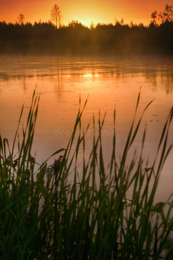 Затишье, приятный теплый дождь лета и туман над рекой стоковое изображение rf
