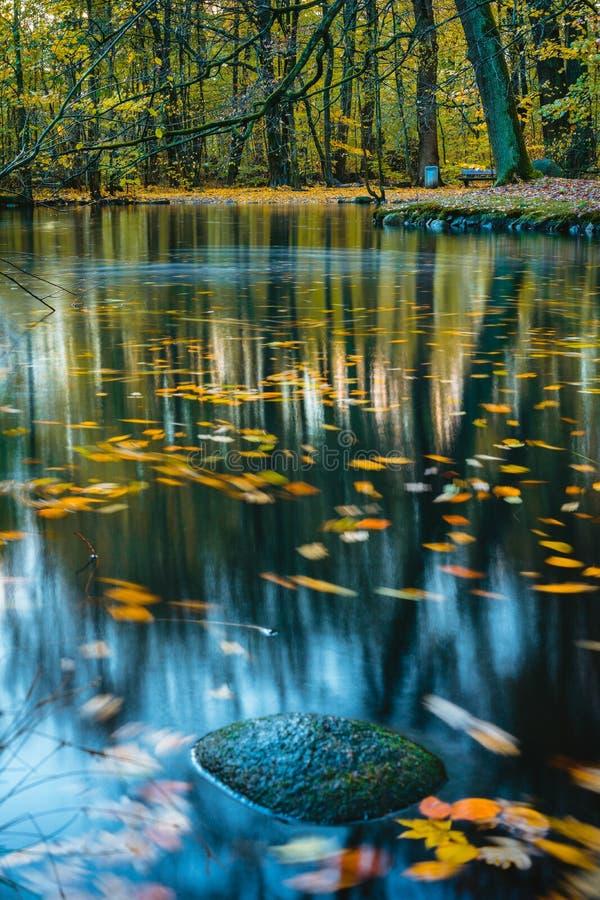 Затишье, тихое настроение в парке осени Озеро лес, красочная долгая выдержка осени Листья в поверхности воды стоковая фотография rf