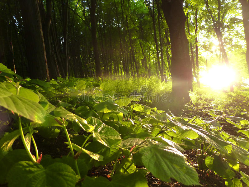 Затмение леса стоковое изображение