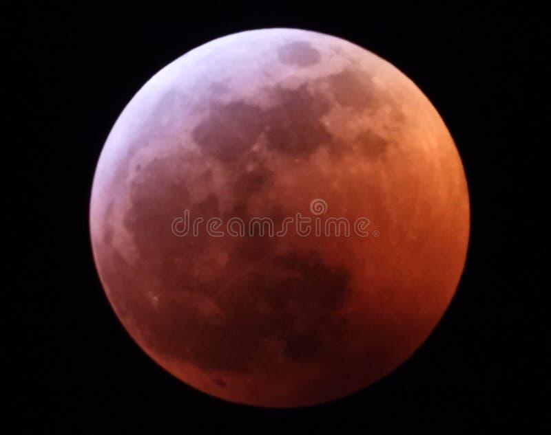 Затмение супер луны крови волка полное 20-ого января 2019 стоковые фото