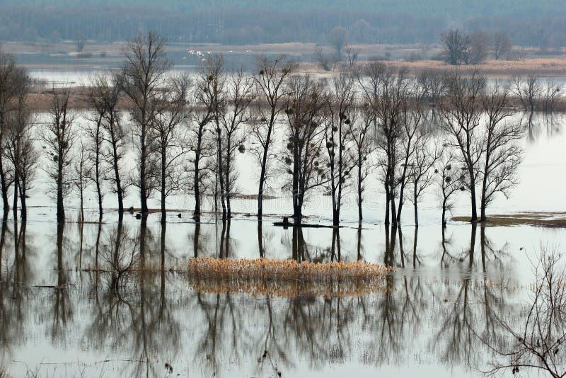 Затопленные деревья во время прилива весной приурочивают, Украина стоковая фотография rf