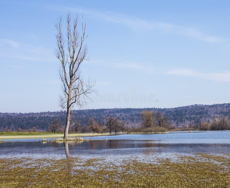 затопленная земля стоковое изображение rf
