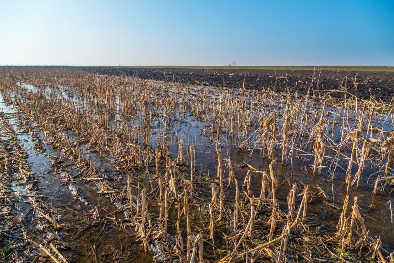 Затопленное аграрное поле на зиме стоковые фотографии rf