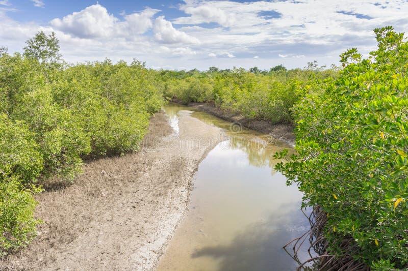 Затопленные деревья в провинции Phetchaburi леса мангровы Таиланд стоковые фотографии rf
