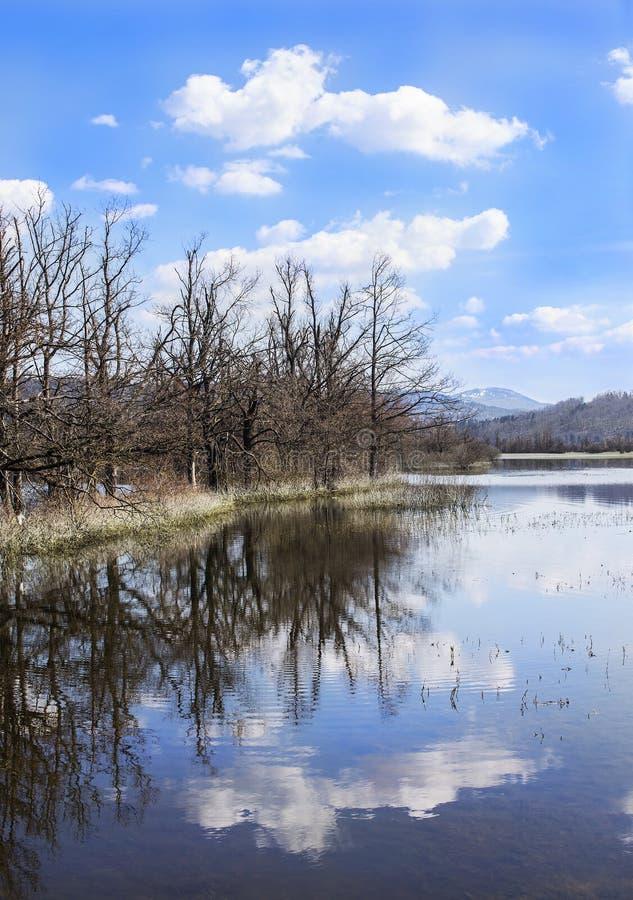 Затопленные деревья с облаками стоковое изображение rf