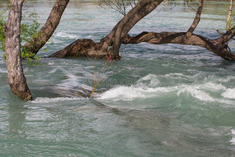 затопленные деревья стоковая фотография