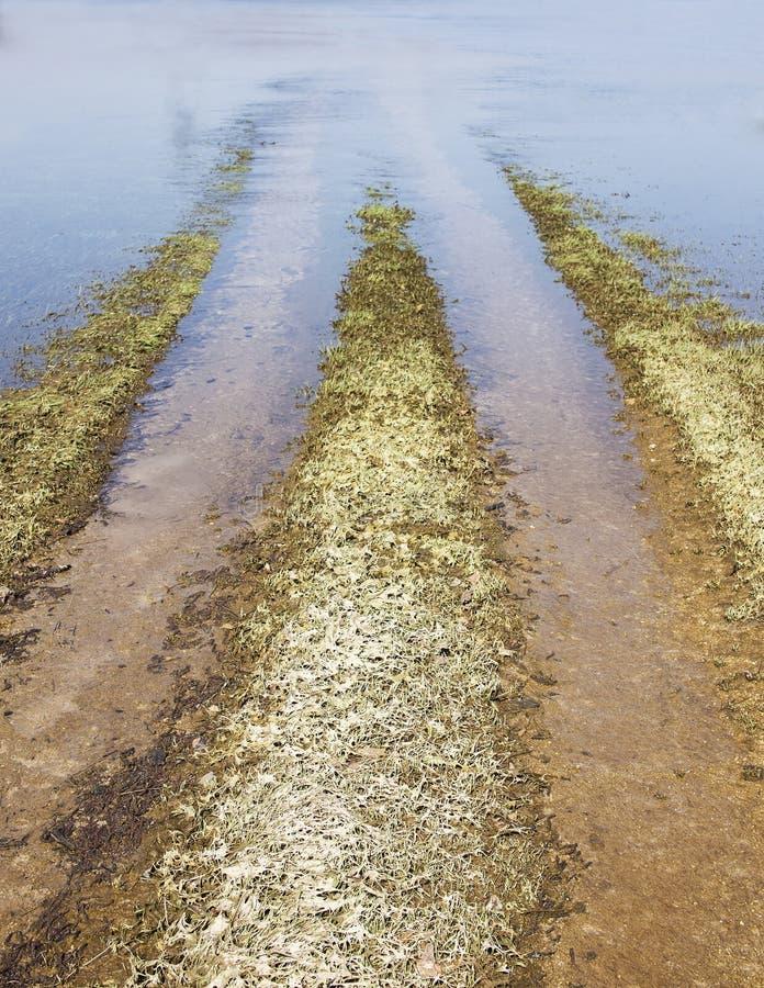 Затопленный путь к полям стоковые фото