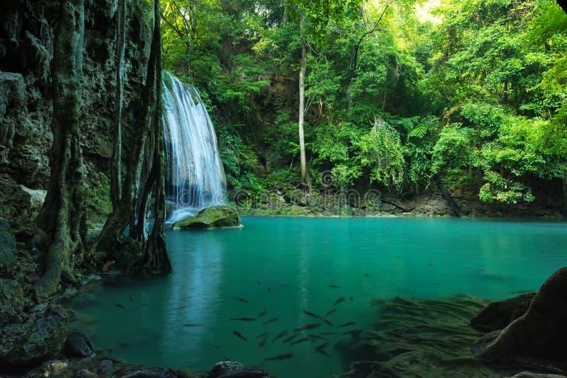 Захватывающий зеленый водопад в глубоком лесе, водопад Erawan стоковое фото rf