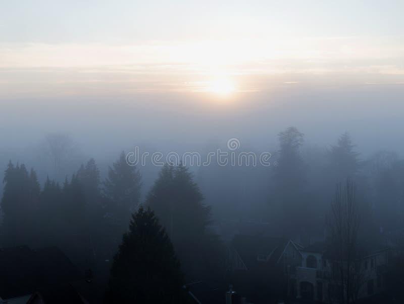 Заходящее солнце освещает толстый банк тумана обрамленный несколькими слоев деревьев в фронте стоковые фотографии rf
