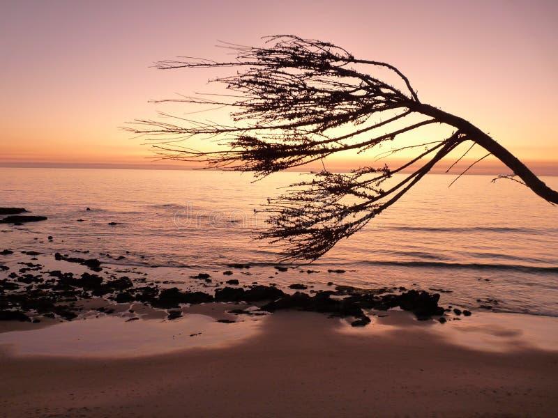 заходящее солнце newport пляжа стоковые фото