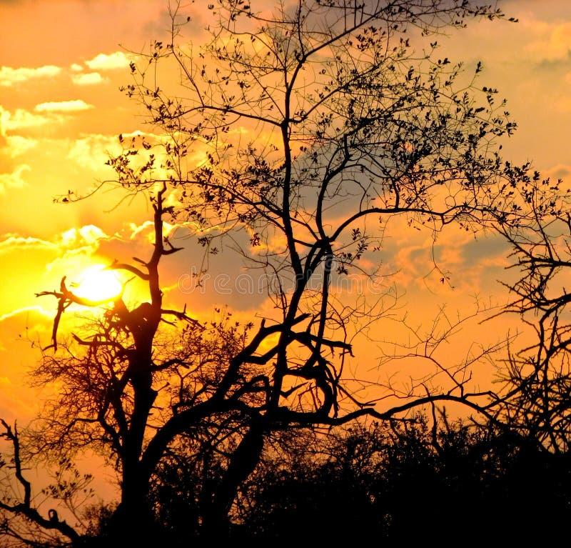 заход солнца Африки южный Стоковые Изображения