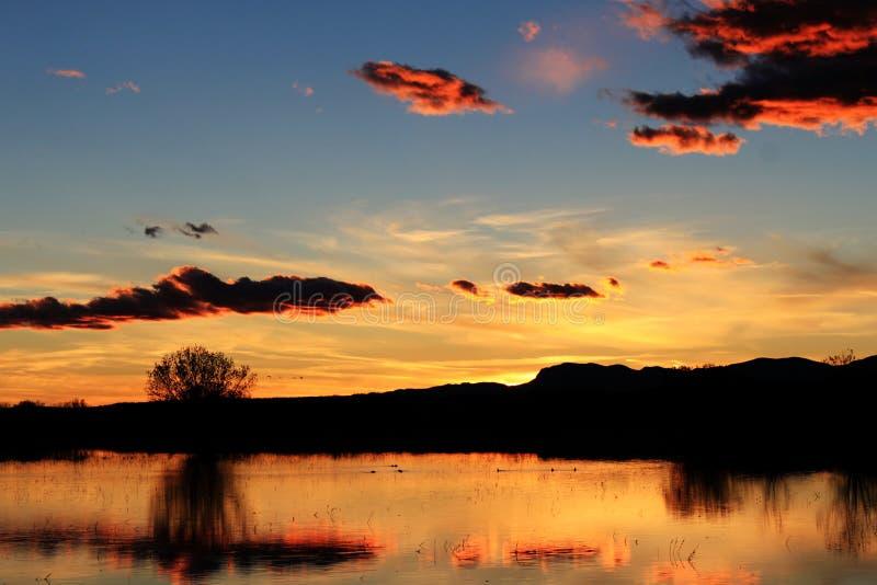 заход солнца болотоа стоковая фотография rf