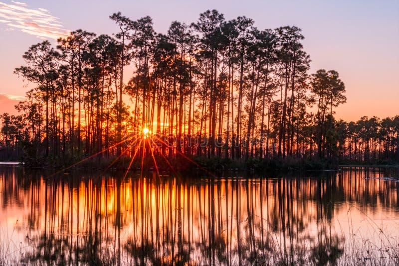 Заход солнца в болотистых низменностях стоковое фото rf