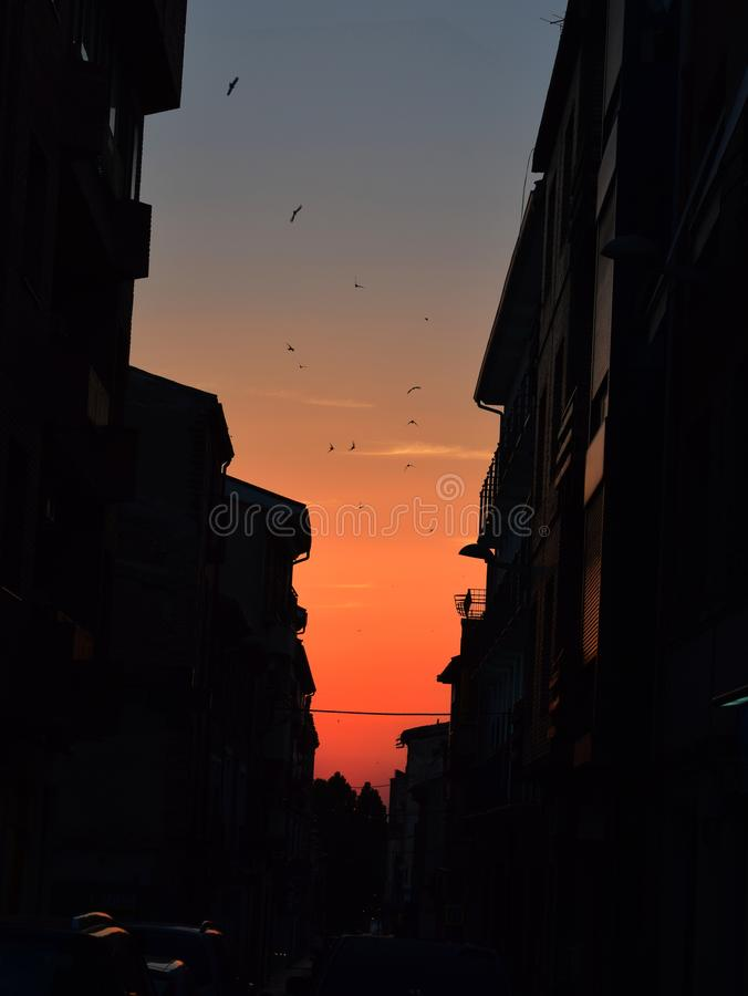 Заход солнца в городе с птицами стоковое фото rf