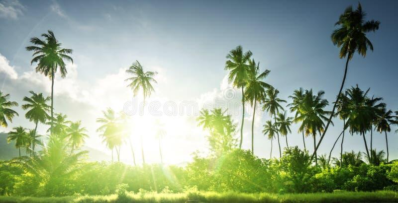Заход солнца в джунглях, Сейшельских островах стоковое изображение rf