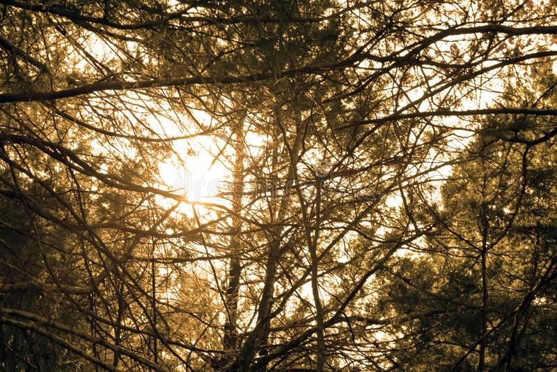 Заход солнца в лесе, горы Ozark, MO стоковые фотографии rf