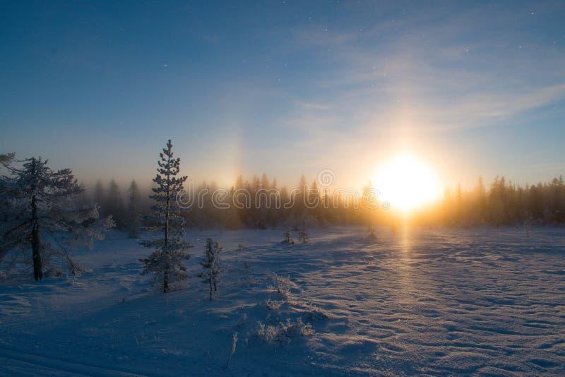 Заход солнца в лесе, декабрь со снегом в воздухе стоковая фотография rf