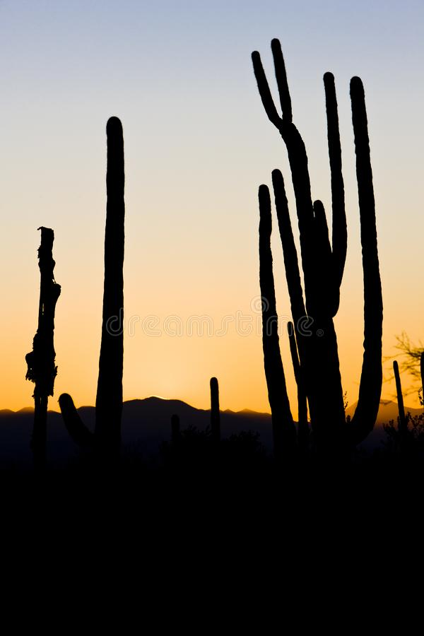 заход солнца в национальном парке Saguaro, Аризоне, США стоковое фото