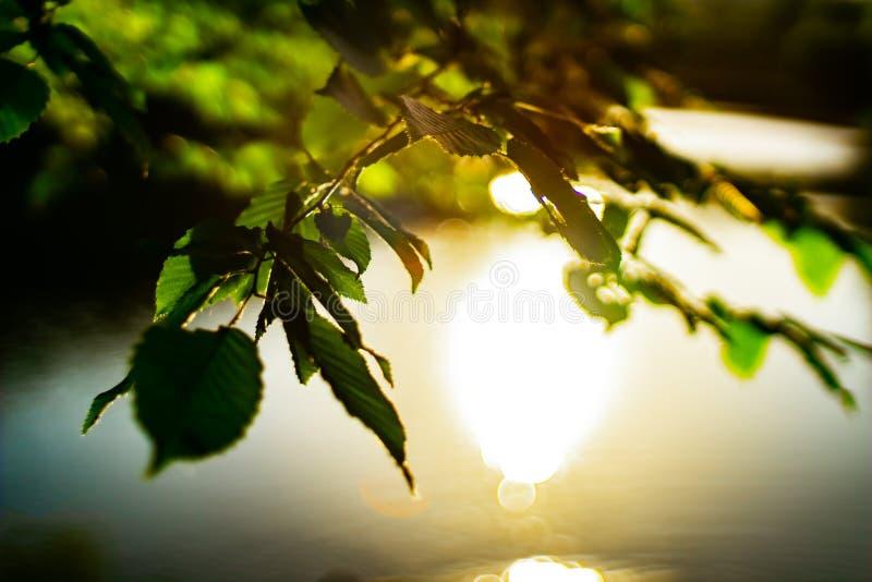 Заход солнца в одном из парков Киева стоковое изображение rf