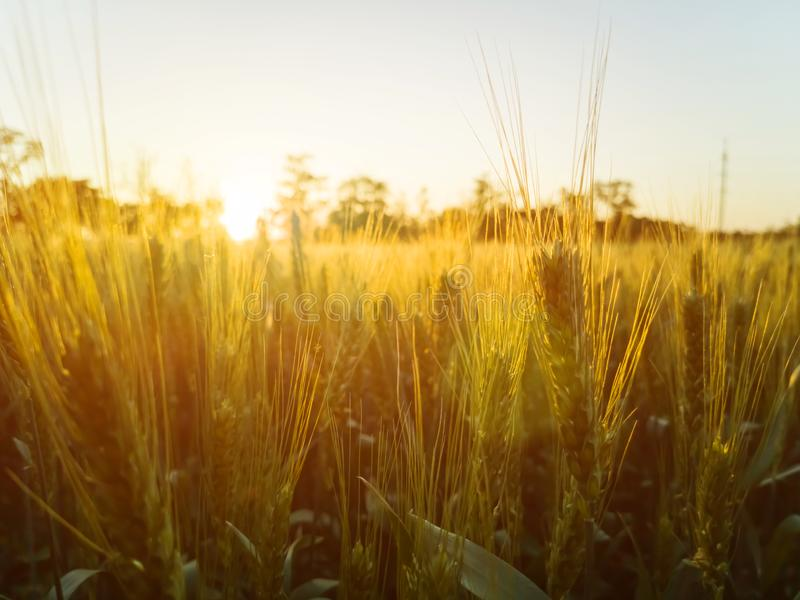 Заход солнца в поле, красивый яркий цвет стоковая фотография