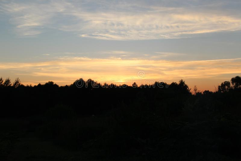 Заход солнца в темном лесе стоковое изображение