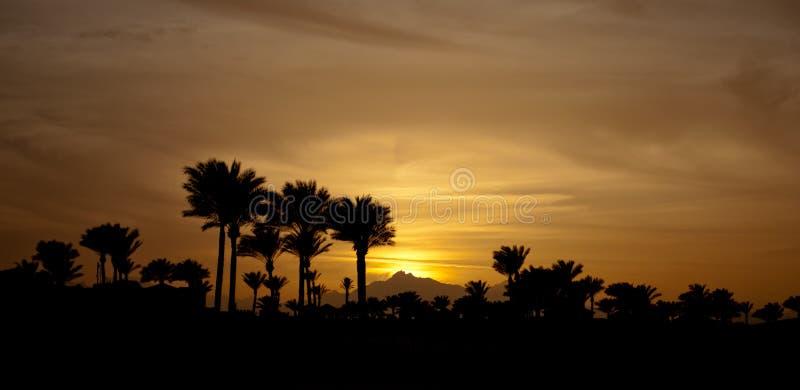 Заход солнца в установках с ладонями Вечер зимы с ладонями Желтое солнце вниз и небо стоковое фото