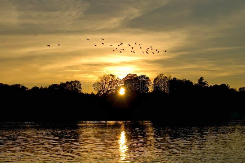 заход солнца гусынь стоковые фото