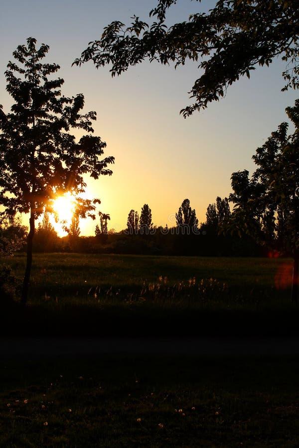 Заход солнца 003 дерева стоковое фото rf