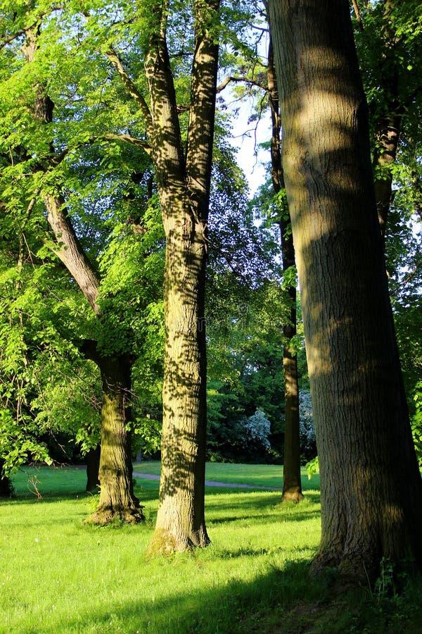 Заход солнца 005 дерева стоковое фото