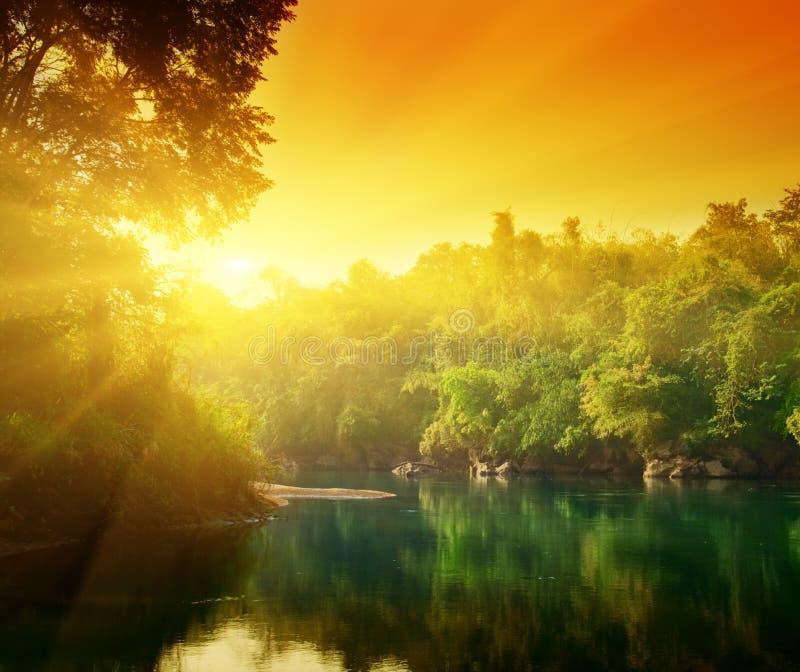 заход солнца джунглей стоковое изображение rf