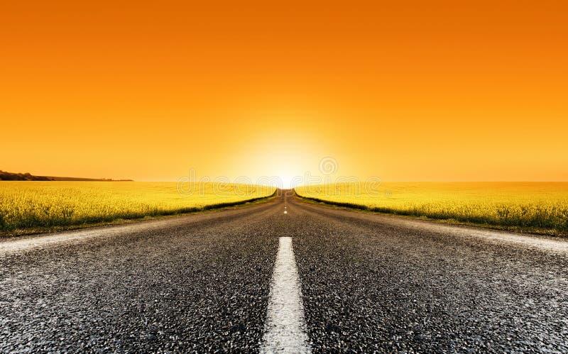 заход солнца дороги canola стоковое изображение