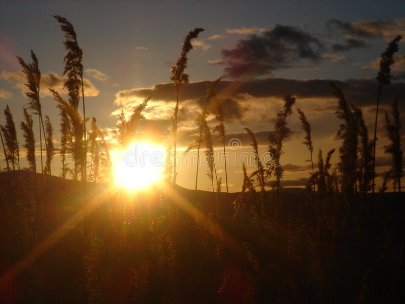 заход солнца зерна стоковая фотография rf