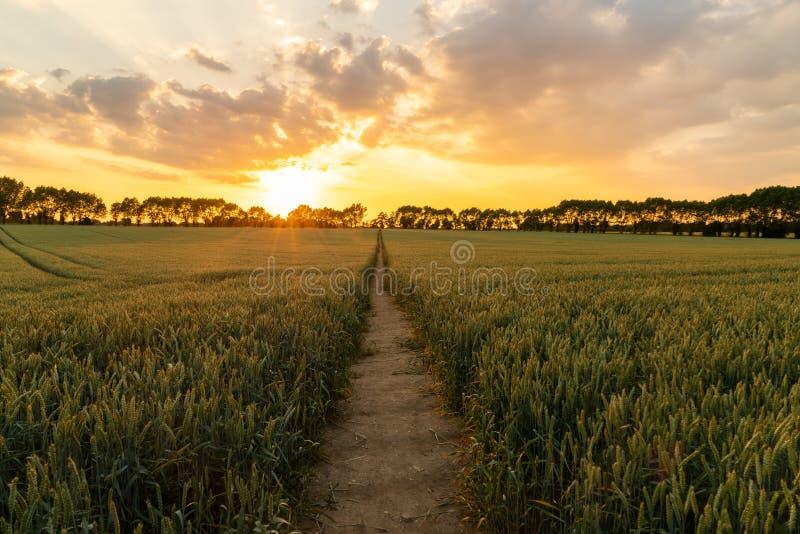 Заход солнца или восход солнца над путем через поле сельской местности пшеницы стоковые фотографии rf