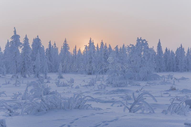 Заход солнца и восходы солнца зима температуры России ландшафта 33c января ural Оранжевые небо и силуэты деревьев на предпосылке  стоковое изображение rf