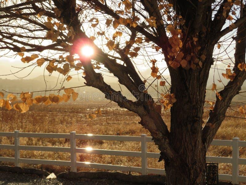 Заход солнца и дерево стоковое изображение rf