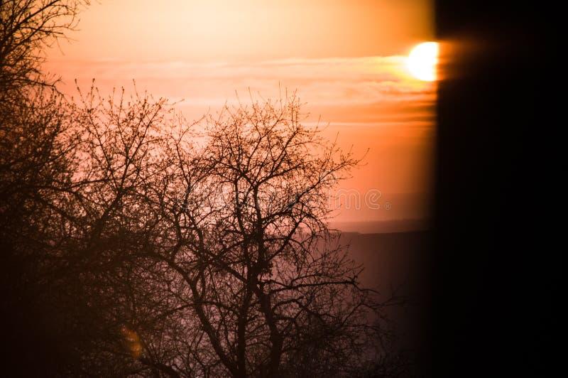 Заход солнца и деревья через зазор ворот стоковая фотография rf