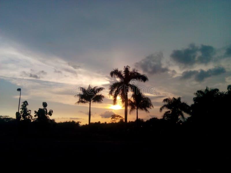 Заход солнца и кокосовые пальмы, shiluet стоковая фотография